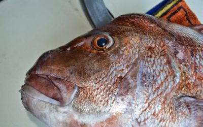 Snapper Tournament 11th July 2020